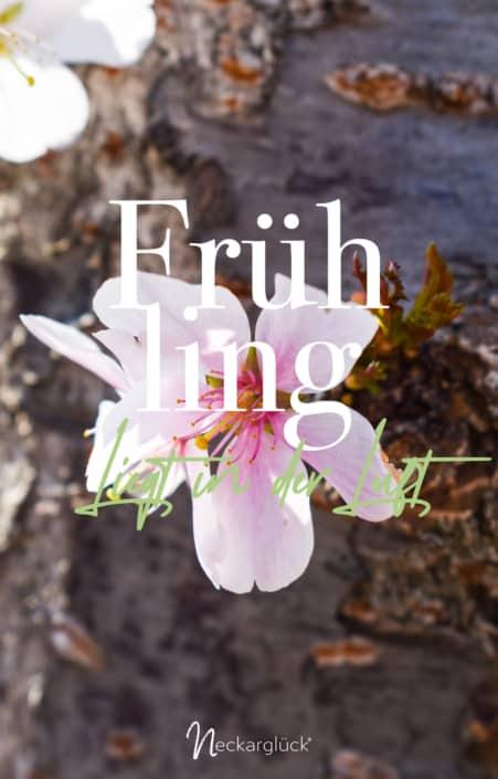 Fotografie und Design Frühling 2020